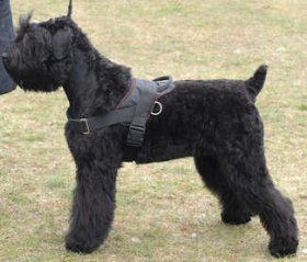Adjustable Nylon multi-purpose harness for tracking/pulling-Black terrier
