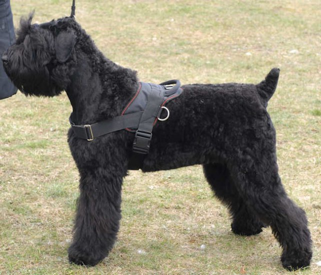 Adjustable Nylon dog harness for Giant Schnauzer , for tracking/pulling
