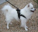 Adjustable Small Nylon multi-purpose dog harness for small breeds