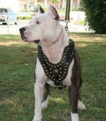 Adjustable Royal Dog Harness - Exclusive Design Studded Leather Harness