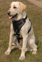 Adjustable Walking Leather Dog Harness for Labrador Retriever