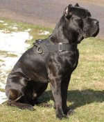 Adjustable Nylon multi-purpose dog harness for tracking/pulling cane corso