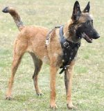 Adjustable Agitation/Protection Leather Dog Harness for Belgian Malinois
