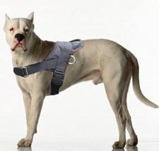 Dogo Argentino dog harness