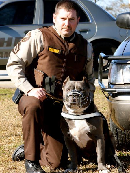 Pitbull Adjustable Nylon Dog harness-Working/Pulling Dog Harness -H6 PLUS