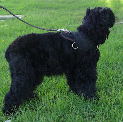 Adjustable Nylon dog harness for russian terrier