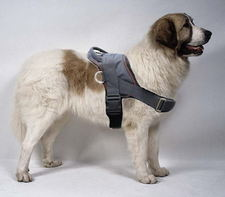 Pyrenean Mastiff Adjustable Nylon dog harness with handle