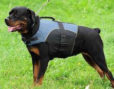 Rottweiler Dog Vest - Rottweiler Dog Coat - Rottweiler Jacket