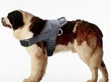 Saint Bernard dog harness-Adjustable Nylon dog harness for Pulling/pulling