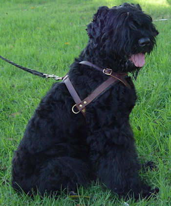 leather dog harness for Pulling, wallcking