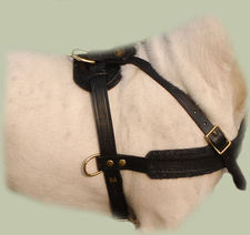 Adjustable Tracking Leather Dog Harness for Bull Terrier - Pulling Harness