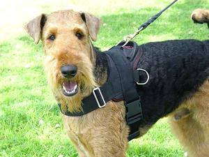 airedale terrier nylon dog harness for training