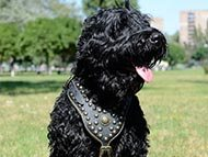 black-russian-terrier-harnesses-category