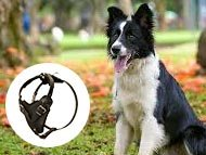 Border Collie Harnesses