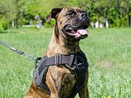 boxer-harnesses-category