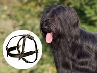briard-harnesses-category