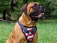 Bullmastiff Harnesses