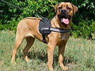 cane-corso-harnesses-category