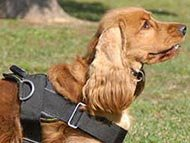 Cocker Spaniel Dog Harnesses