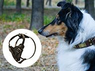 Collie Harnesses