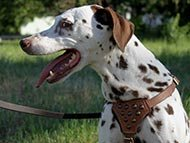 dalmatian-harnesses-category