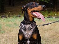 doberman-harnesses-category