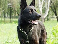 german-shepherd-harnesses-category