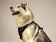 husky-harnesses-harnesses-category
