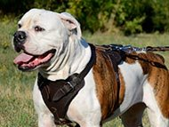 large-dog-harnesses-category