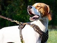 pointer-harnesses-category
