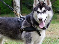pulling-dog-harnesses-category