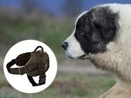 Pyrenean Mastiff Harnesses