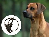 rhodesian-ridgeback-harnesses-category