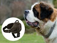 Saint Bernard Harnesses