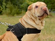 Shar-Pei Harnesses