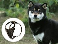 shiba-inu-harnesses-category