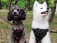 small-harnesses-category