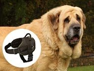 Spanish Mastiff Dog Harnesses