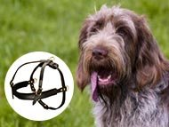 Spinone Italiano dog Harnesses