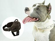 Staffordshire Bull Terrier Harnesses