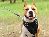 Staffordshire Terrier Harnesses
