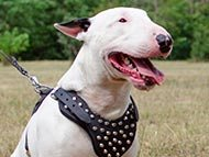 studded-dog-harnesses-category
