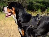 Tracking Dog Harnesses