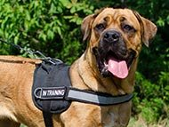 training-dog-harnesses-category