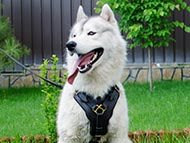 walking-dog-harnesses-category