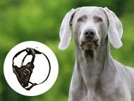 Weimaraner Dog Harnesses
