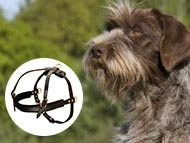Wirehaired Pointing Griffon Harnesses