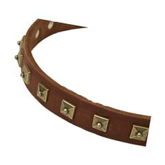 Fancy studded leather dog collar