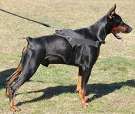 Adjustable Nylon multi-purpose dog harness for tracking/pulling Doberman