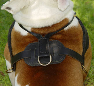 leather Tracking dog harness for bulldog